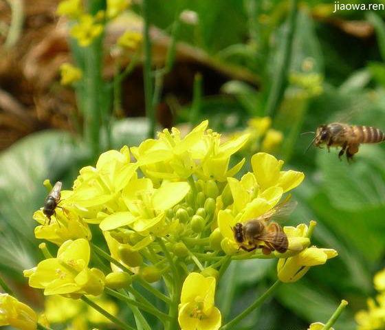 勤劳的小蜜蜂(三年级作文、游记作文、写景作文)